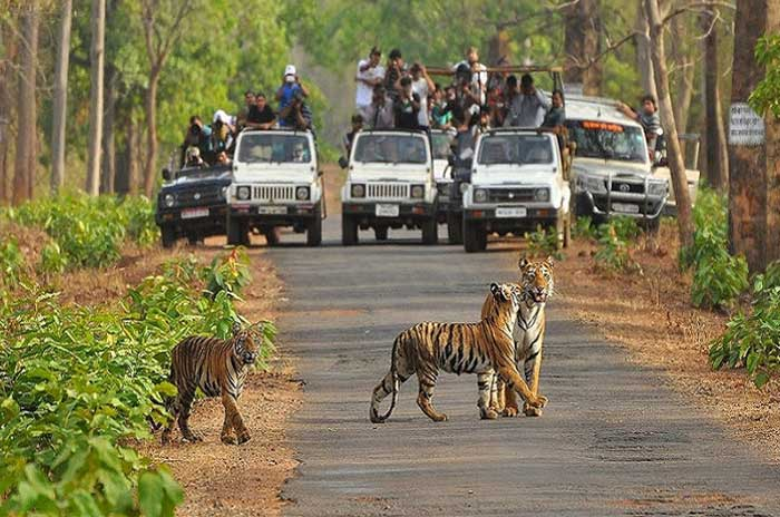 Ranthambore National Park Tour Package / With Packagewala.com